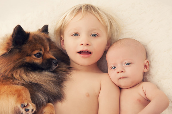 Baby photo of Samson and Elijah and pup taken by our Auckland baby photographer