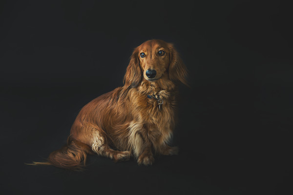 Dave- pet photo taken by our Auckland dog photographer