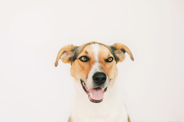 Pet photography  taken by our Auckland pet photographer